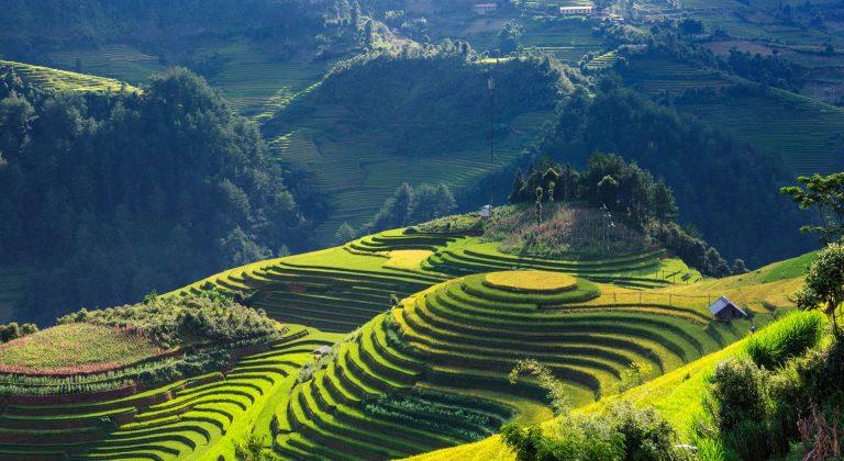 Chińska herbata – właściwości i zastosowanie
